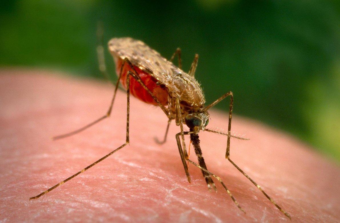 Blocking male mosquito hormones may improve malaria control | THE OUTBREAK