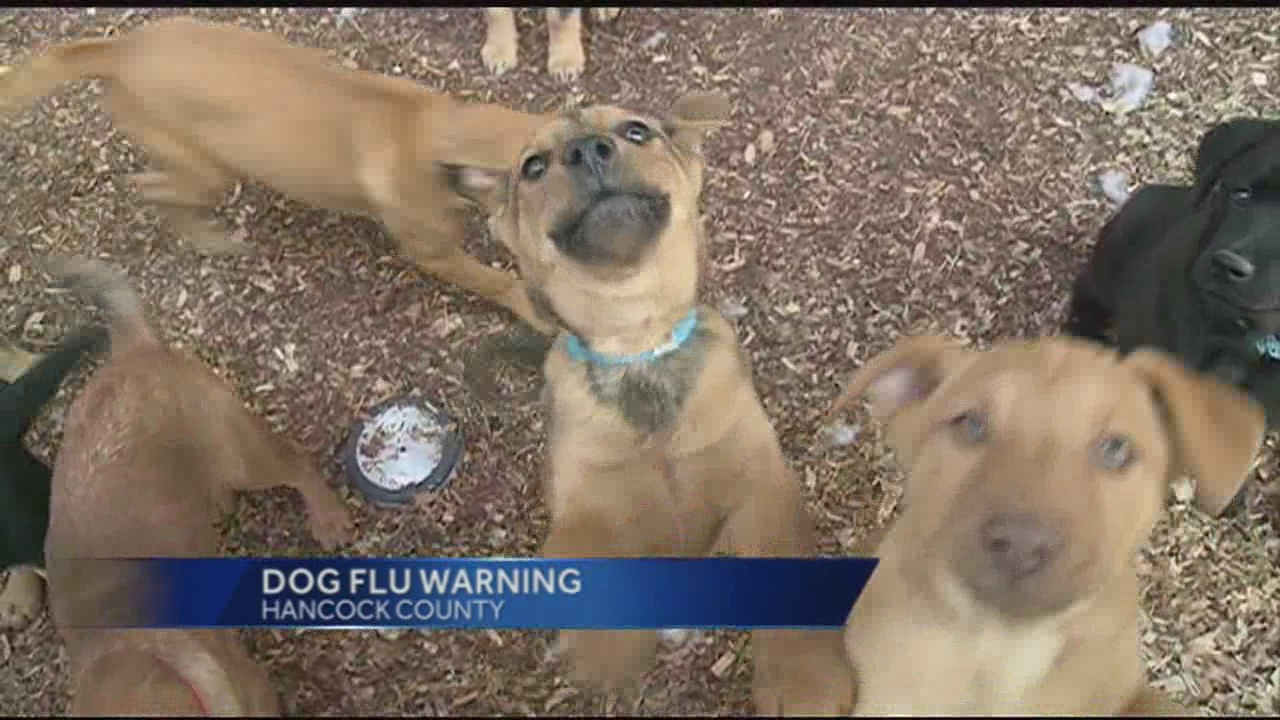 img-Dog-flu-closes-reported-in-Mississippi