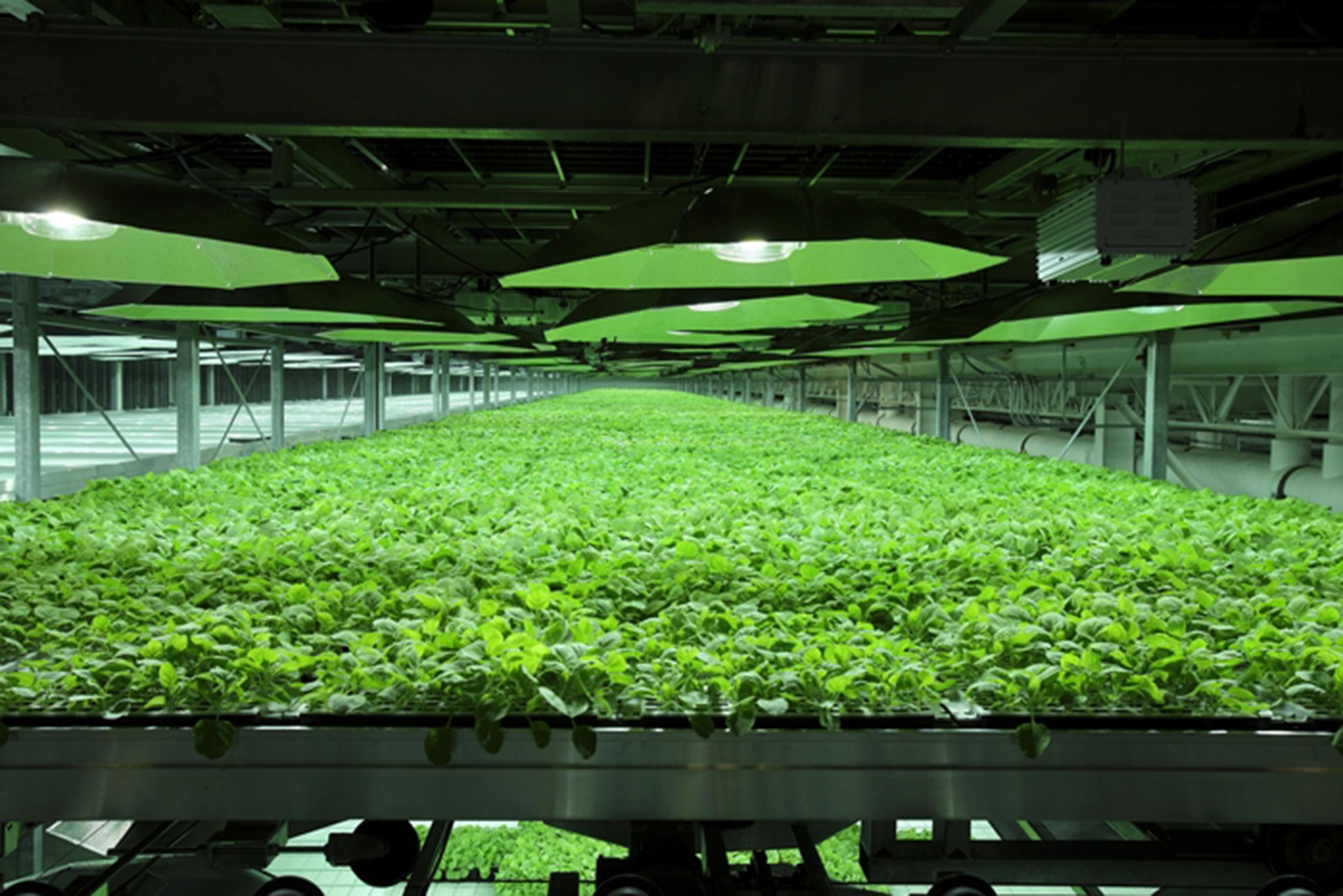 140805-tobacco-plants-kbp-01_a0b3416f74f504b24baa9ca1aa90f727